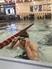 Luka Misevic Men's Swimming Recruiting Profile