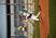 Braydon Armstrong Baseball Recruiting Profile