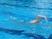 Sam Reiger Men's Swimming Recruiting Profile