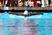 Jalen Evans Men's Swimming Recruiting Profile