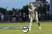 Elijah Cook Football Recruiting Profile