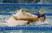 Jacqueline Triglia Women's Swimming Recruiting Profile