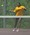 Athlete 576299 small