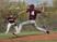 Jaden Aguino Baseball Recruiting Profile