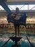 Erin Falsey Women's Swimming Recruiting Profile