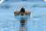 Brian Luong Men's Swimming Recruiting Profile