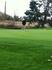 Emily Wisuri Women's Golf Recruiting Profile