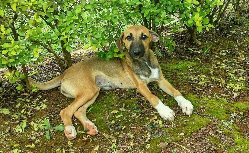 Falta de tempo desestimula adoções de cães, afirma Zoonoses de SP
