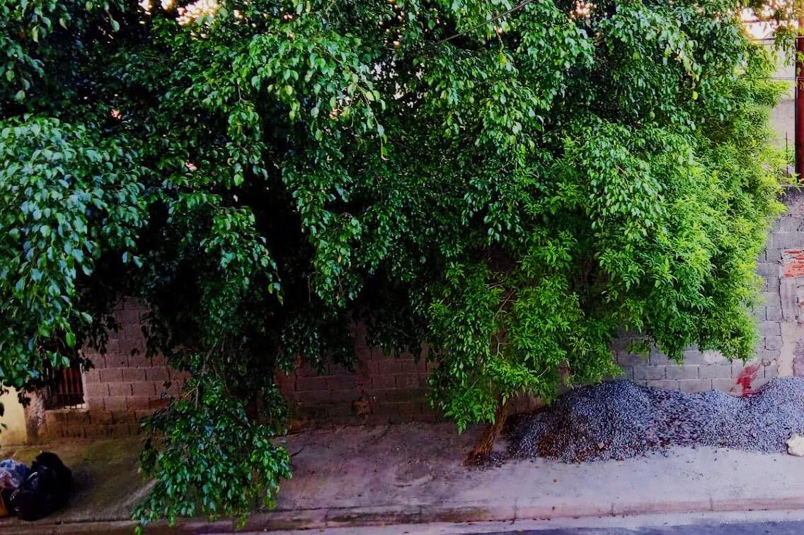Subprefeituras de SP gastam R$ 4,7 milhões por mês com podas de árvores
