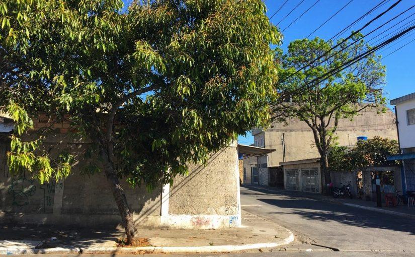 São Miguel e Itaim Paulista não tiveram árvores plantadas pela Prefeitura em 2020