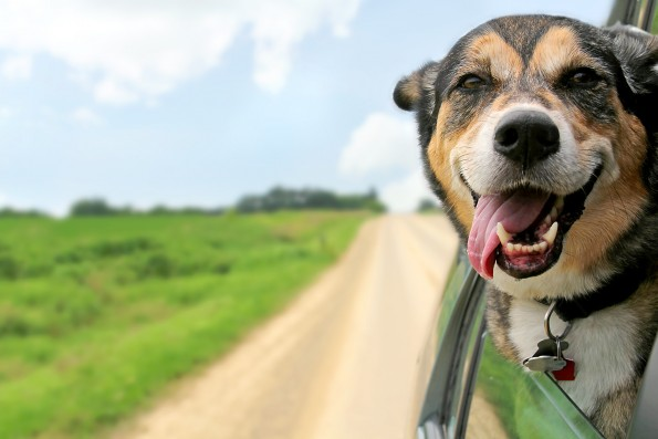 Introducing Roadie Pet Shipping