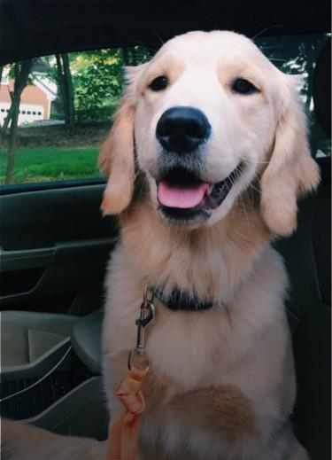 Cooper's Big Adventure