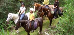 Horse Haven Farmstay
