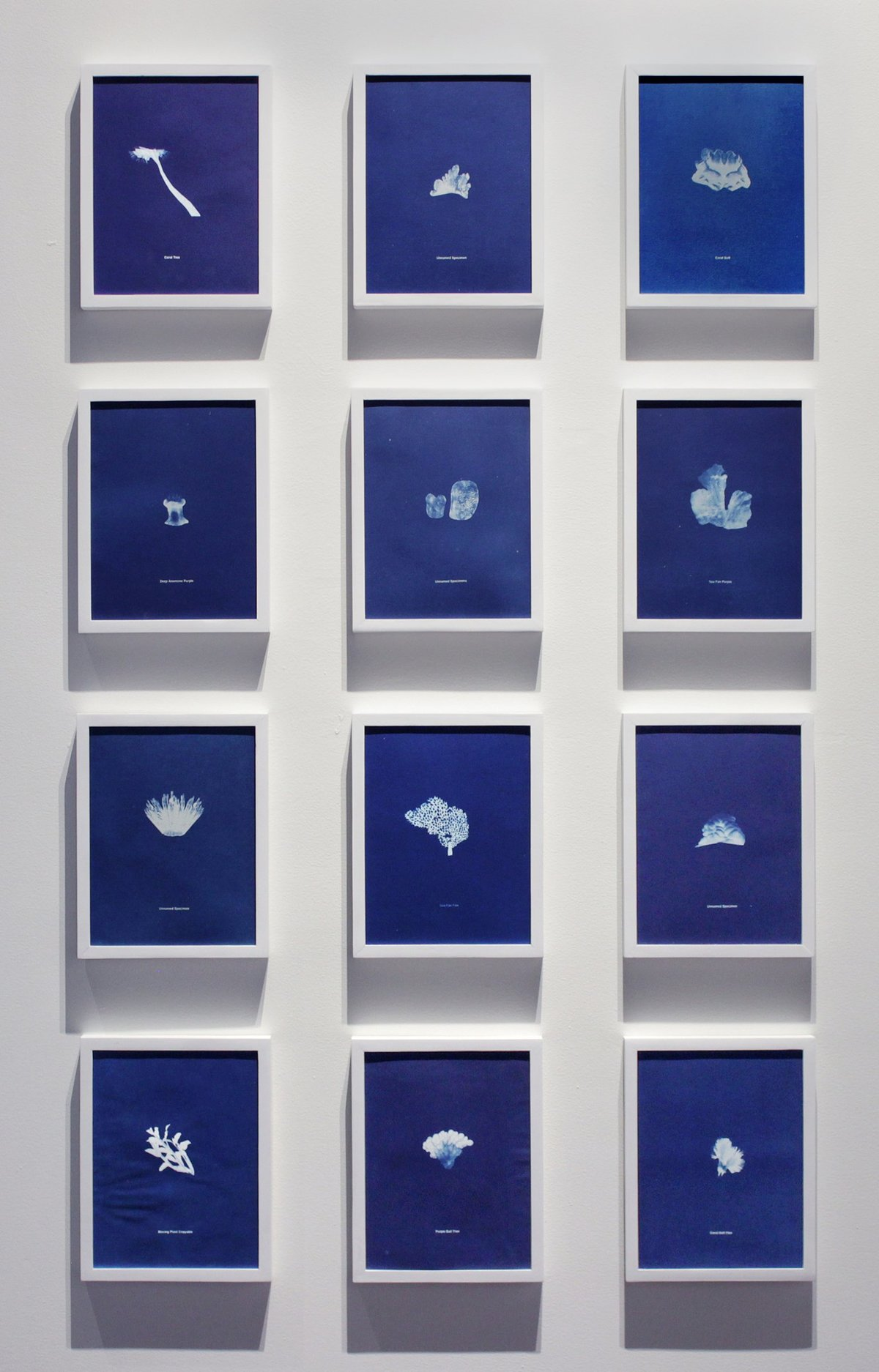 Anna atkins cropped corrected