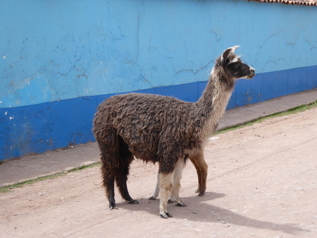 Photo in the album Cusco El Segundo