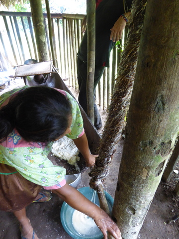 This woman is squeezing most of the liquid out of the yuca pulp to make a sort of flour.
