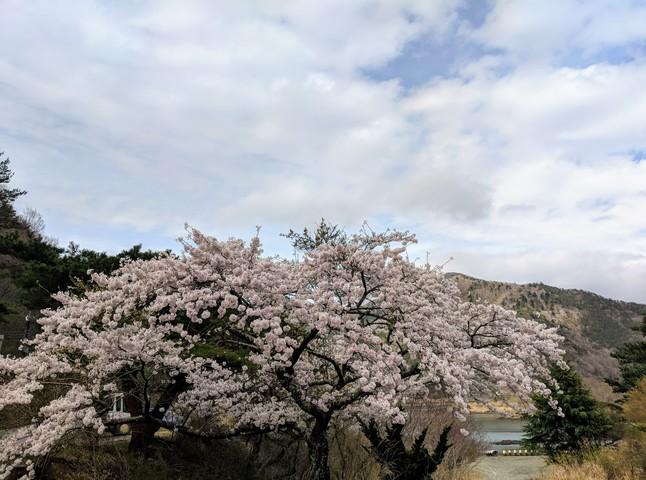 Photo in the album Fujikawaguchiko 2018