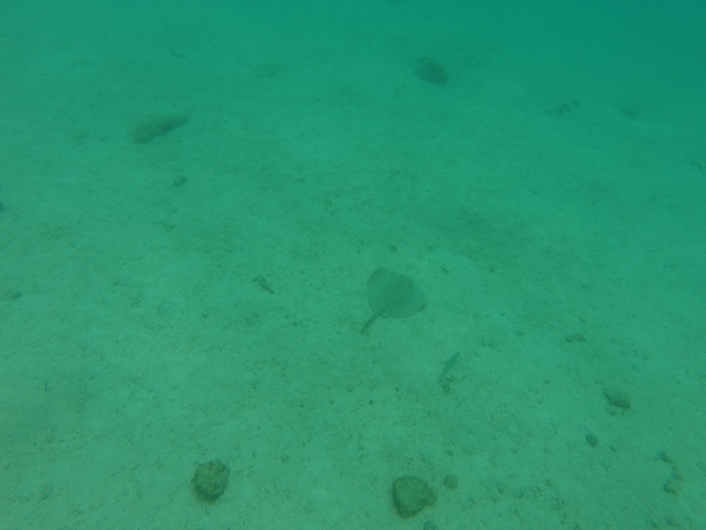 Not a great picture, but that's a stingray in the middle.