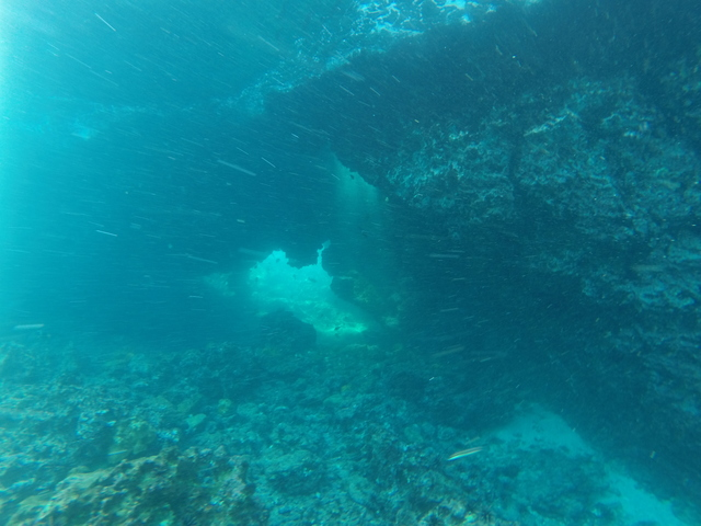 Photo in the album Galapagos Underwater