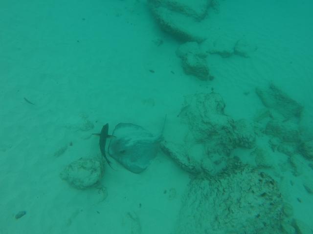 Photo in the album Galapagos Underwater