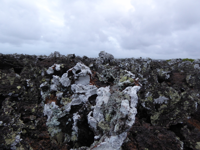 Volcanic rock covered in different species of lichen.