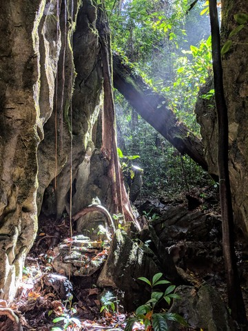 Photo in the album Gunung Mulu 2018
