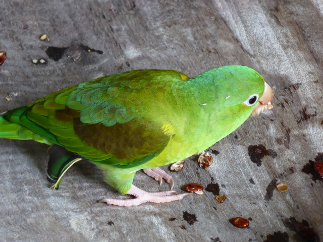 This little parakeet came to eat our watermelon seeds while we were taking a break on the way back.