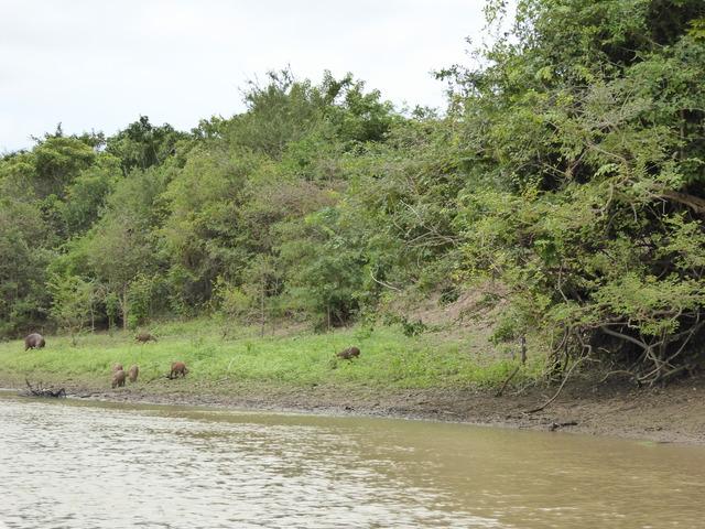 Photo in the album Rurrenebaque & Pampas