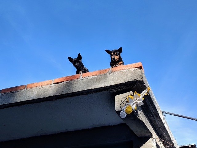 These dogs were cute, watching everyone from up on the second story of this building.