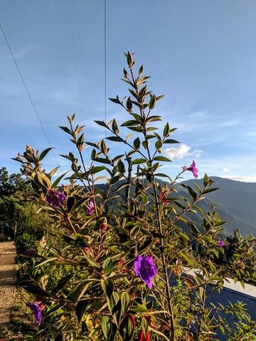 Photo in the album San Jose del Pacifico 2019