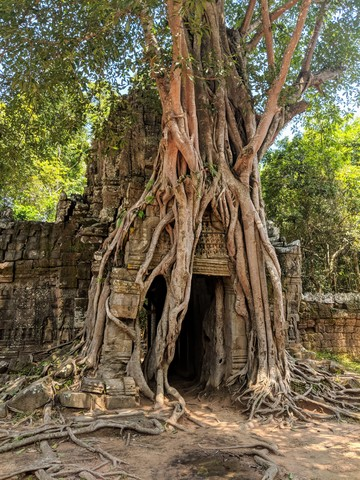 Photo in the album Siem Reap 2018