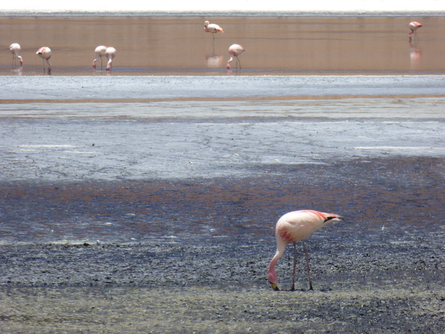 Apparently the flamingos here turn pink because of high levels of beta-carotene in the algae they eat.