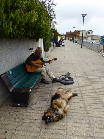 I guess this dog really loved the song.