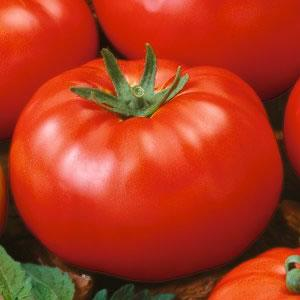 bartletts tomato