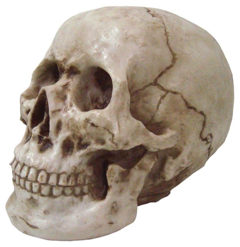 Crânio Caveira Skull Einstein Grande Decorativo Resina