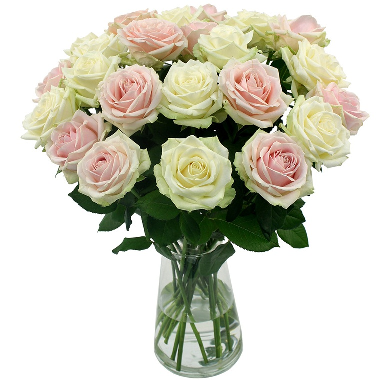 Win a PosyBox 24 stem rose bouquet