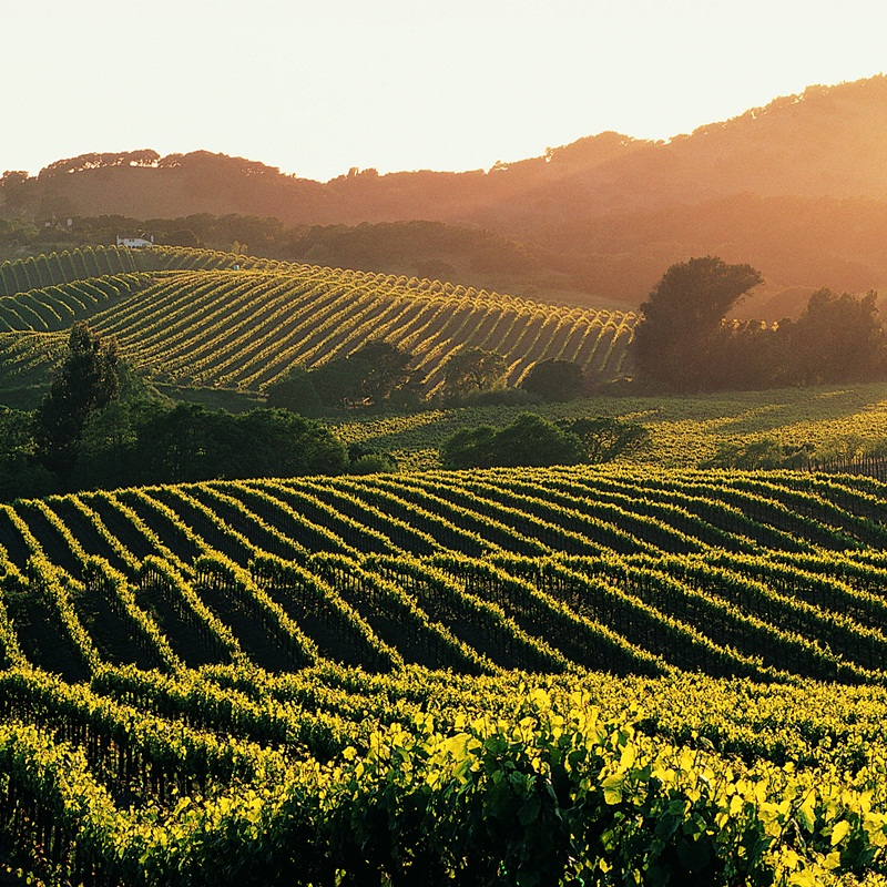 Win a Trip to Napa, California