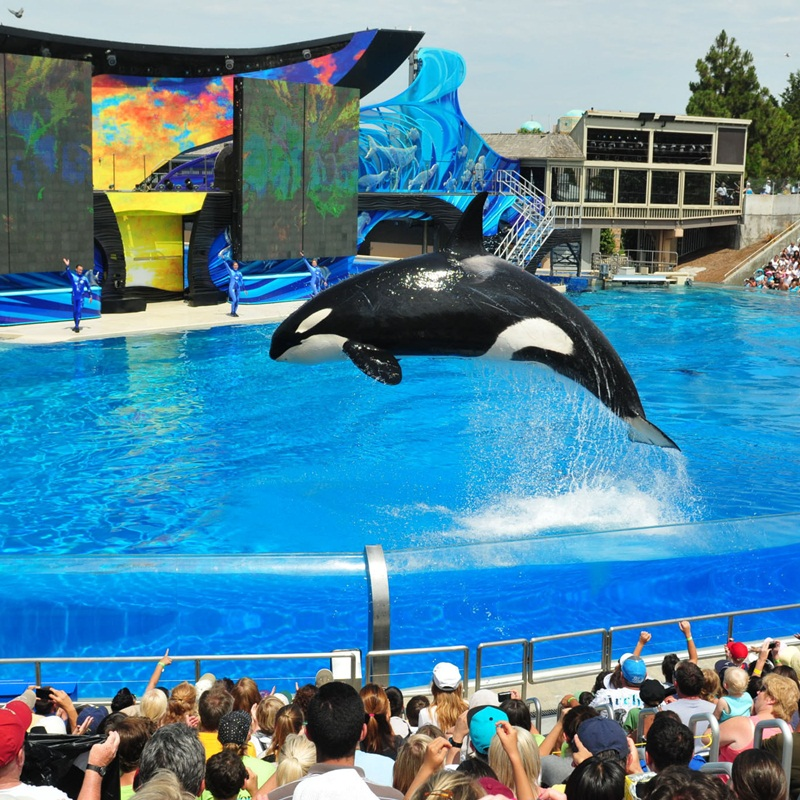 Win a Family outing to the Gold Coast's Sea World