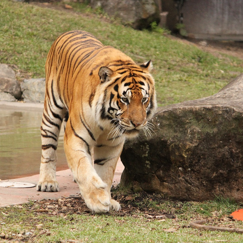 Win a Family Pass to Dreamworld and Tiger Photo Experience