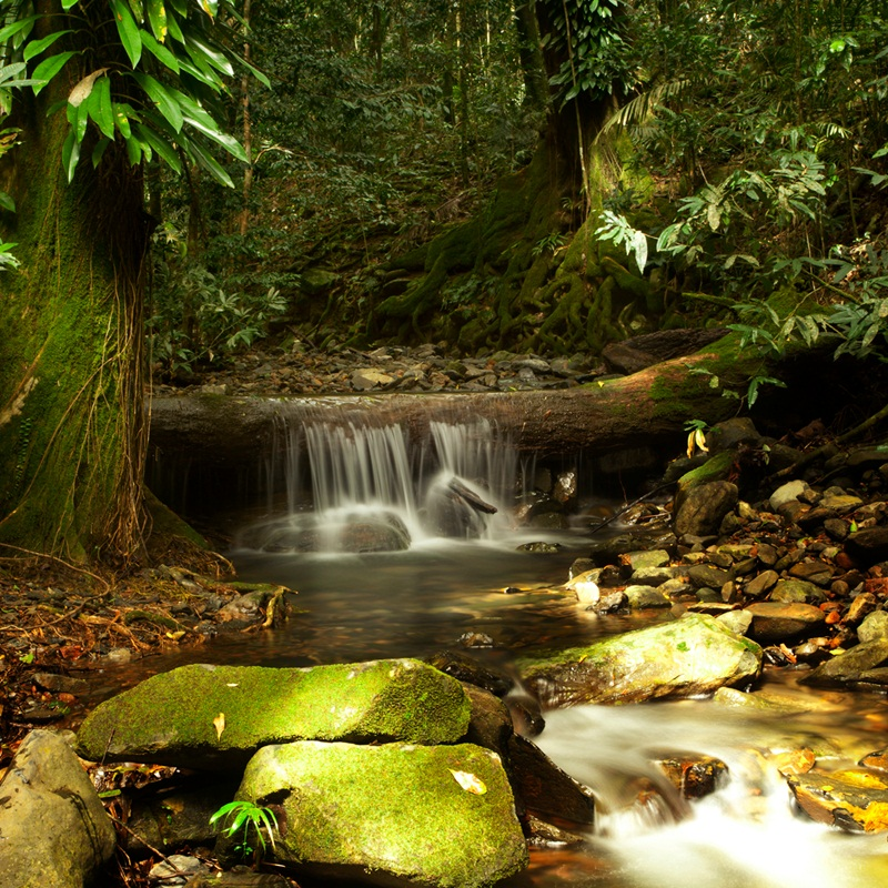 Win A Family Holiday To The Daintree Rainforest