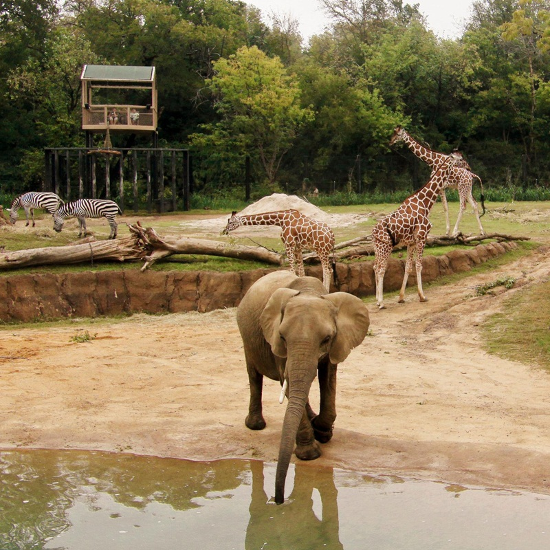 Win a family passes to Wildlife Sydney Zoo