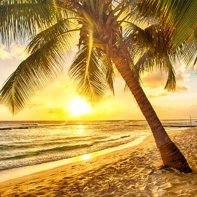 Have the best beach holiday ever when you fly to the Caribbean for FREE!