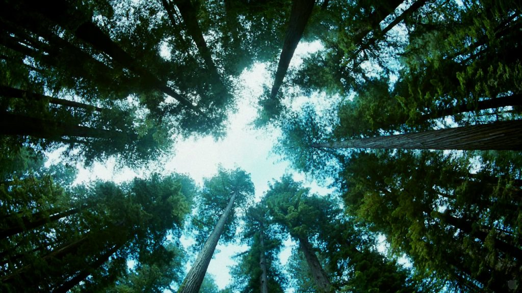 Calvin, Terrence Malick's The Tree of Life, and The Image of God for Youth: Part 1