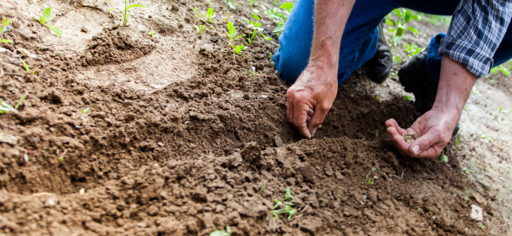 The Mustard Seed Kingdom of God