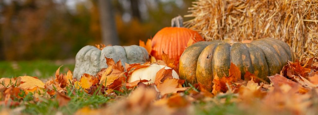 Growing in Gratitude: Cultivating a Thankful Heart in an Entitled Culture