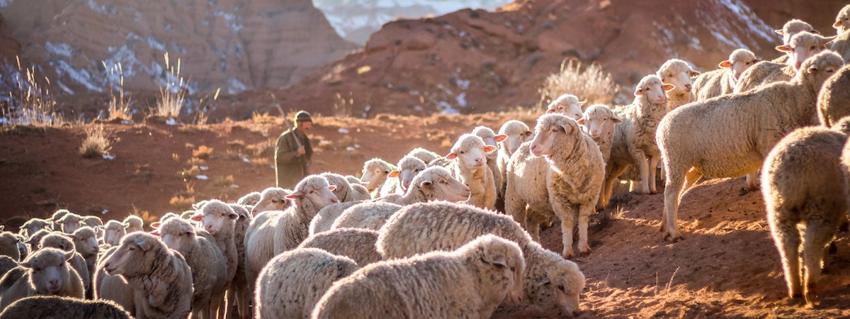 Rescued By the Good Shepherd: Day Fourteen, 2019 Christmas Devotional for Students