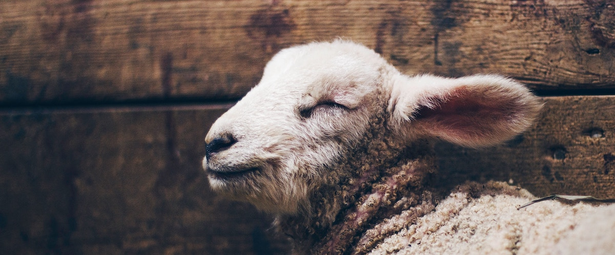 Rooted Podcast: Brian Dye on The Lamb, the Rabbi, and the Christ
