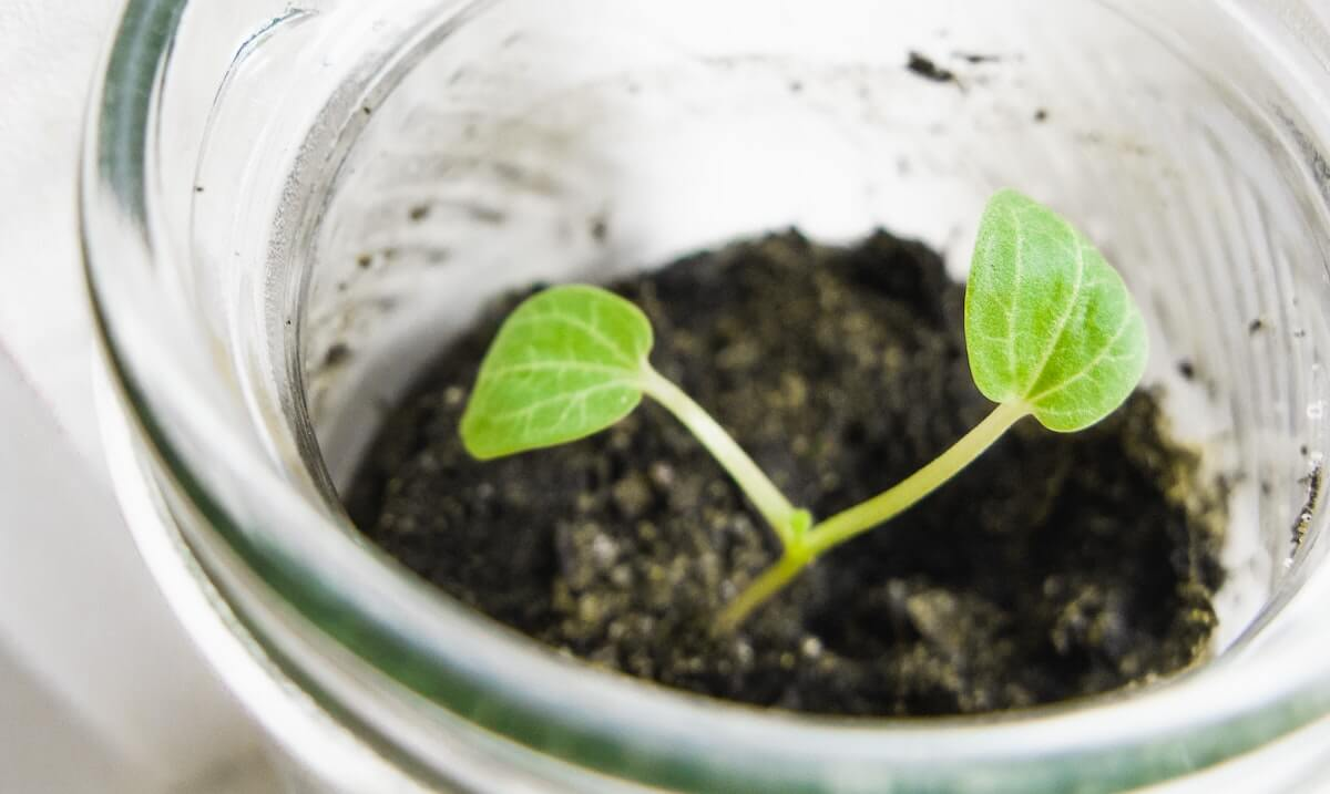 Starting at the Beginning: Studying Genesis As We Reopen