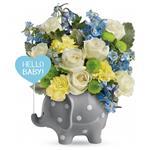6245 - Hello Baby Santa Maria CA delivery.