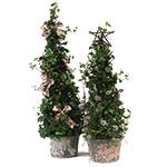 1889 - Ivy Tree Santa Maria CA delivery.